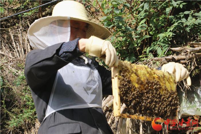 陇南西和为中华蜂养殖构建双保险(组图)