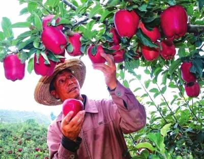 """央视将免费为甘肃省6个农产品打广告""""天水花牛苹果""""领衔"""