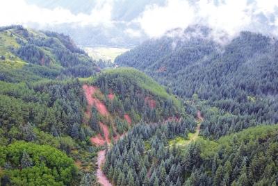 祁连山的绿色回响(图)
