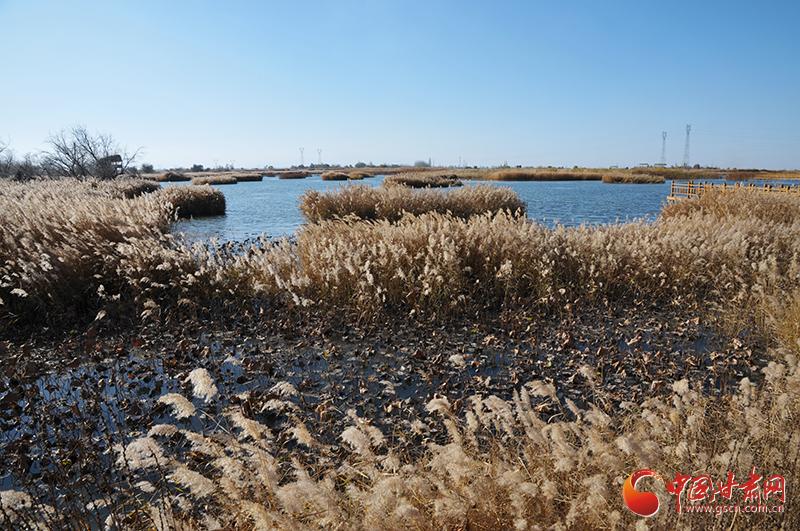 """【美丽中国·网络媒体生态行】张掖国家湿地公园:""""戈壁水乡""""风光无限(图+视频)"""
