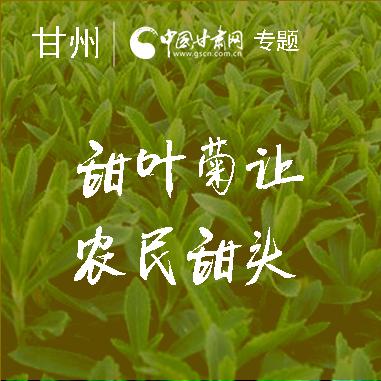 """【致富经】甜叶菊让甘肃甘州农民尝到""""甜头"""""""