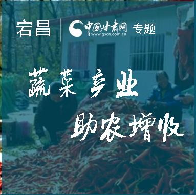 陇南宕昌县乡村发展蔬菜产业助农增收