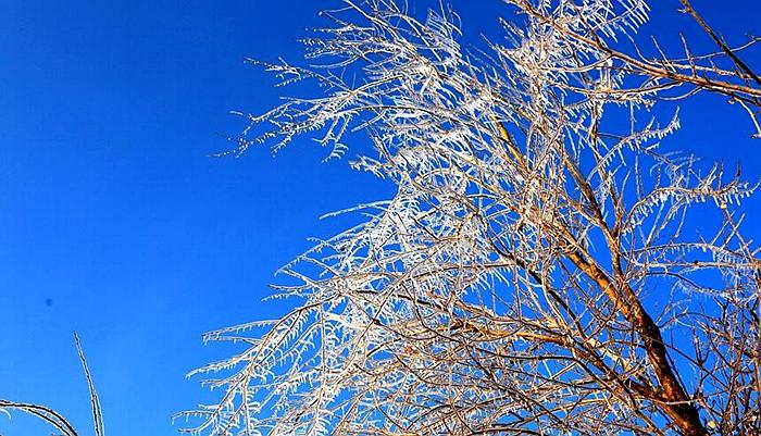 甘肃张掖:立冬时节现玉树琼枝美丽景观