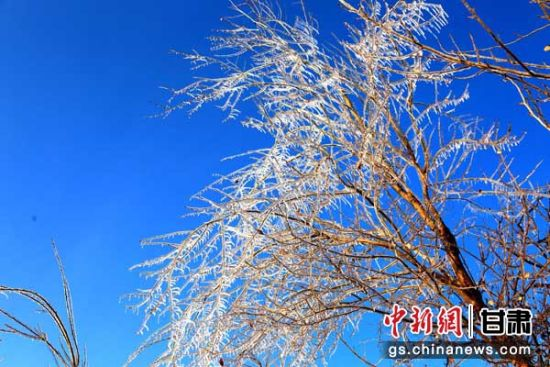 立冬时节张掖现玉树琼枝美丽景观
