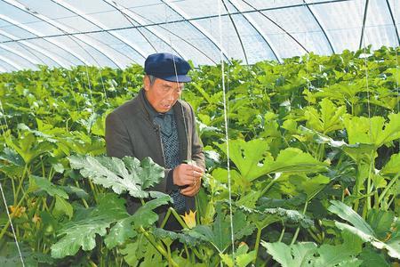 酒泉瓜州:循环产业乐农家