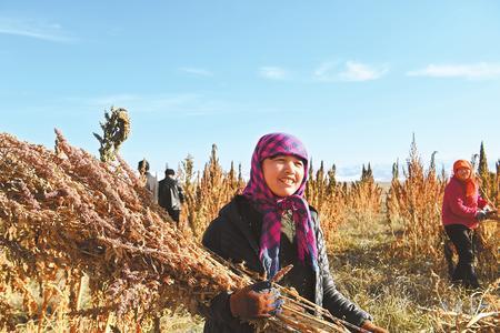 藜麦香飘新家园 ——武威天祝藏族自治县易地扶贫搬迁工作掠影