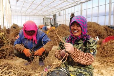 拓宽农民脱贫致富幸福路 榆中全域产业扶贫出成果