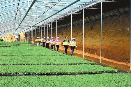 平畴沃野织锦绣 ——白银市推动特色农业产业发展纪实