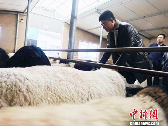 暴力网赚项目甘肃东乡县布楞沟村蜕变:村民养羊、炸馃馃家门口挣钱