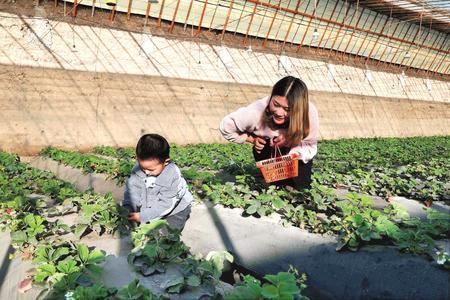 """张掖市甘州区实现""""南果北种"""" 成为当地群众增收新途径"""