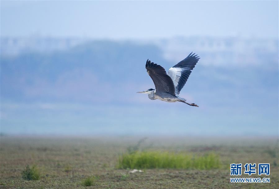 #(环境)(3)江西鄱阳湖:湿地成候鸟乐园