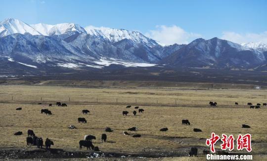 《龙虎和省志》表露:祁连山冰川面积50年均匀畏缩35.6%
