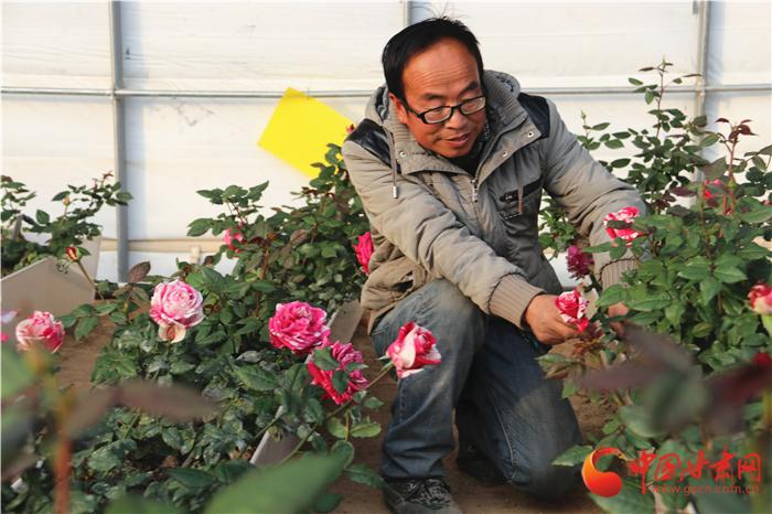 【改革开放40年】高新农业再升级 这个冬季兰州新区草莓熟了(组图)