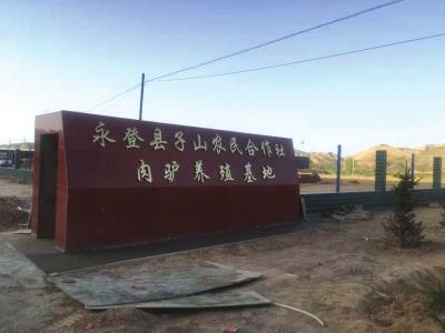 """兰州永登县:特色产业持续发力 东山驴成了大涝池农民的""""致富宝"""""""