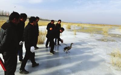 甘肃民勤石羊河国家湿地公园管理局开展野生鸟类放飞活动