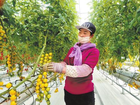 让大地绽放绿色希望 ——酒泉市加快推进戈壁生态农业发展