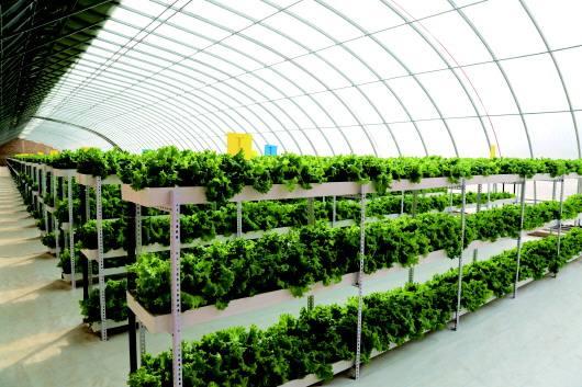 从戈壁走向世界餐桌——酒泉打响戈壁生态农业品牌