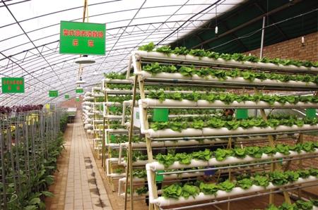 种植特色水果——庆阳西峰群众大棚里种出致富希望