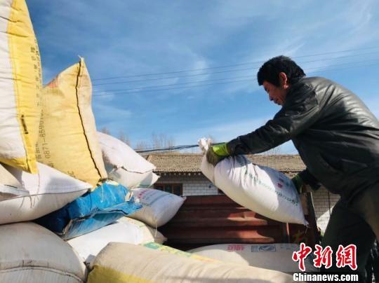 """兰州七里河引种""""高原藜麦"""" 村民""""足不出户""""赚钱"""