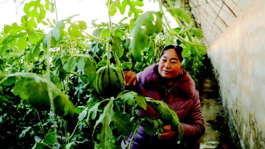 酒泉瓜州县沙河乡狠抓种植业提质增效(图)