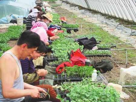 找准好路子 摘掉穷帽子——白银市靖远县推进产业脱贫工作侧记