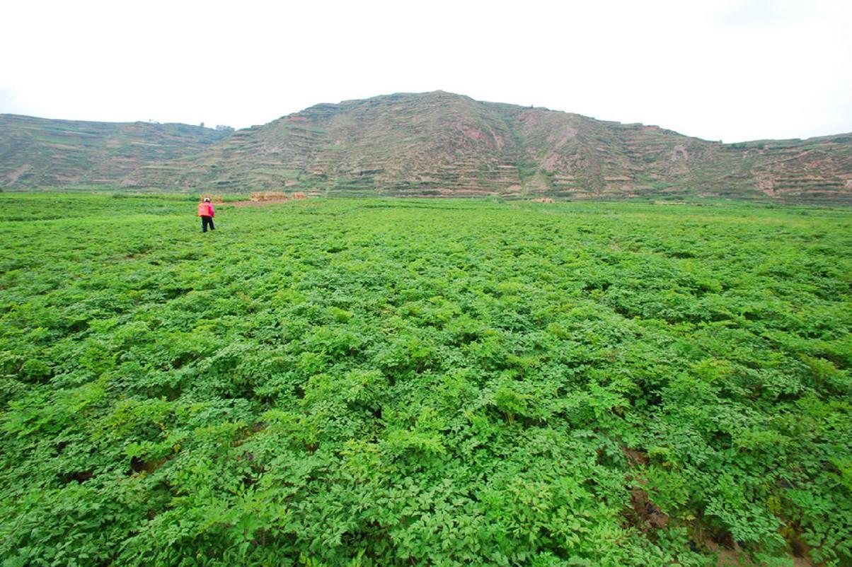 农业高质量发展的探路者——我省改革开放40年绿色农产品发展纪实
