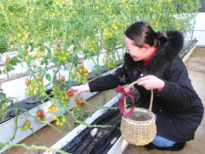 兰州新区现代农业示范园开园