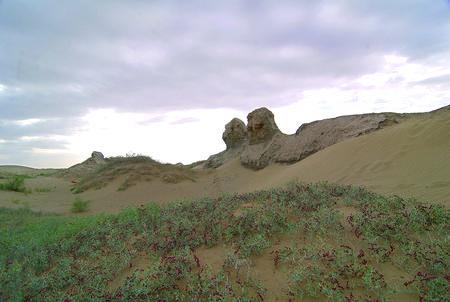 """连古城天然掩护区: 腾格里戈壁的""""绿色卫士"""""""