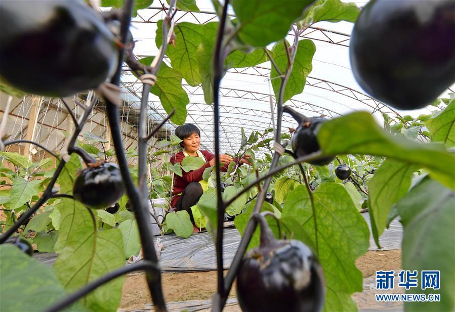 (社会)(2)特色种植促农增收
