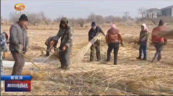 张掖国家湿地公园将收割近万亩芦苇 用于防沙治沙