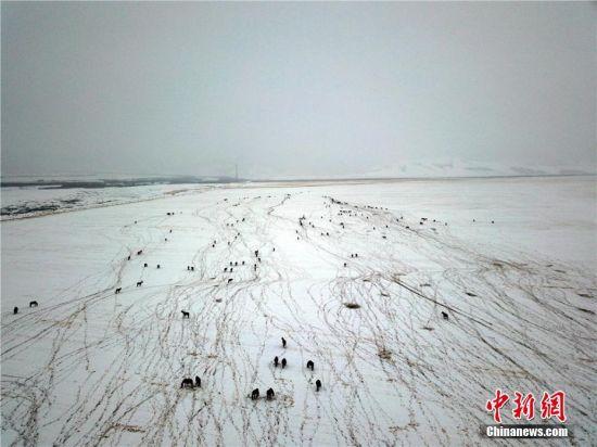 雪落山丹马场 勾画冬日草原美景图