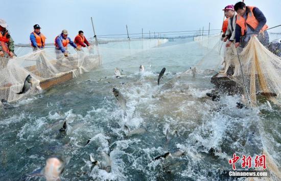 资料图:渔民在捕鱼。卓忠伟 摄
