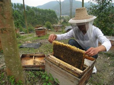 陇南康县中蜂养殖拓宽群众致富路