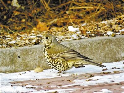 兰州大学发现甘肃鸟类分布新记录种