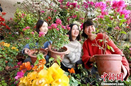 万盆鲜花绽放,引来市民赏花。 王将 摄