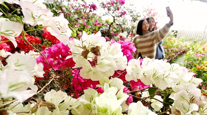 万盆鲜花为张掖化彩妆