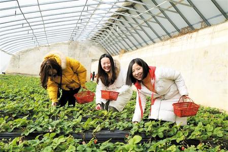 张掖市甘州区名花盆景园内2.7万盆鲜花盛开引市民观赏