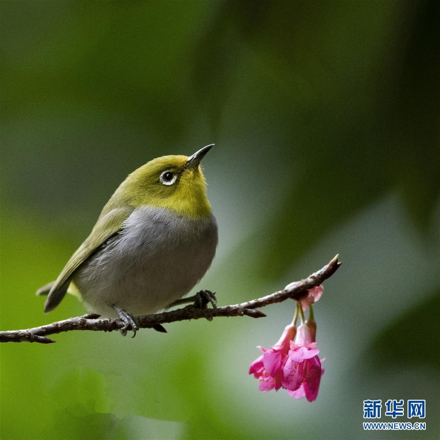 (新华网)(3)红花春鸟共新景