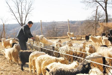 庆阳市宁县盘克镇倾力推进肉山羊养殖产业扶贫