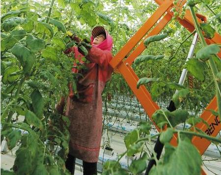 平凉市崆峒区村民给农作物除草、掐花 为其开春生长做准备