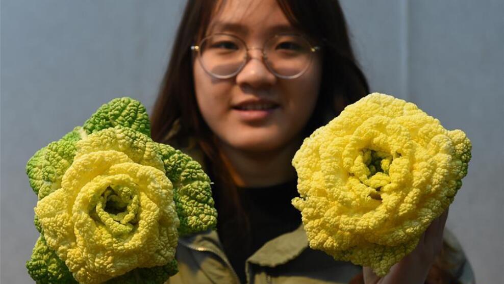"""南京:""""玫瑰白菜""""面市"""