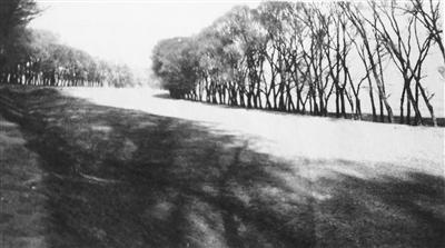 兰州故事丨左宗棠与甘肃绿化,植树护绿三千里,至今犹存左公柳
