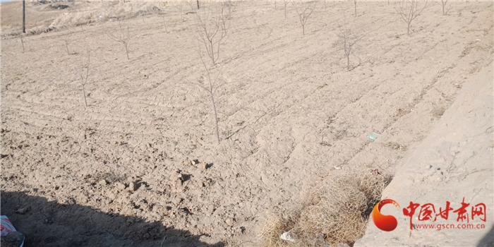 """【3·15消费维权】枸杞种苗坑农三年 坑害靖远农户的""""祸根""""何在?"""