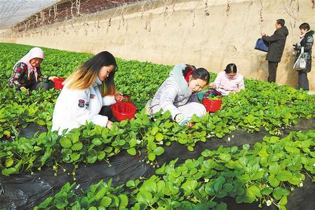 武威市民享受采摘乐趣 体验农家生活(图)