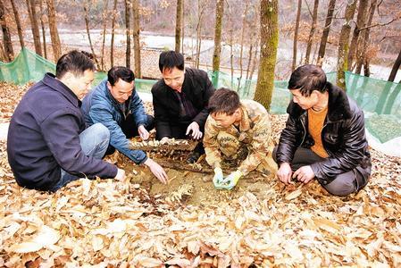 陇南市康县三河坝镇村干部引导大众栽培天麻 增收致富
