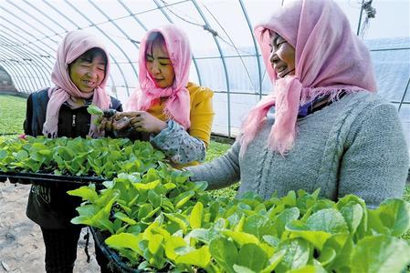 张掖市年蔬菜种植面积达70万亩,产量近250万吨,产值达25亿元