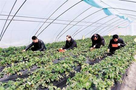 陇南市康县大力扶持农民专业合作社发展 带动群众脱贫致富