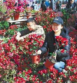 3·12大型植树活动众多兰州市民选购花卉