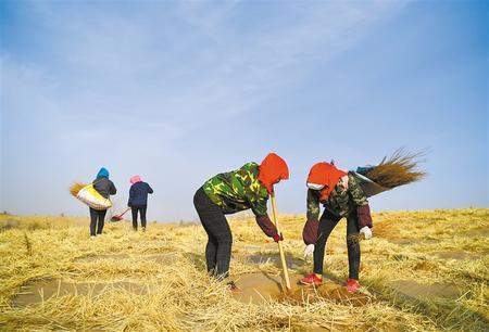 防沙植绿 中国甘肃网不停在路上