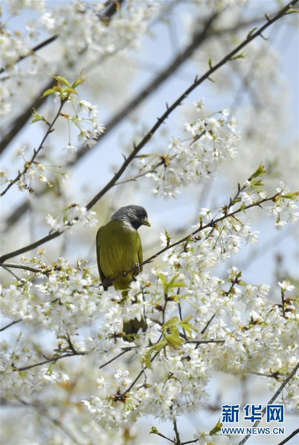 #(环境)(2)鸟儿戏春